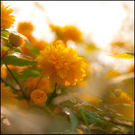 #67 The flower