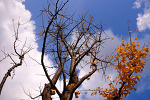 티스토리 달력 사진 공모 (가을)