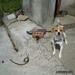 이 강아지는 왜 뱀을 잡아 놓았을까?