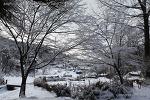 불암산의 겨울 벚꽃 2013.2월
