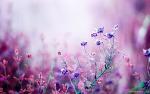 아름다운 핑크, 보라색꽃 바탕화면 wallpaper (FHD 1920*1080)
