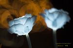울산 대공원의  led 장미들