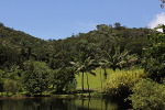 CAIRNS_KURANDA: tropical forest