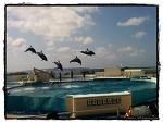 거대한 오션 엑스포 파크 - 오키나와 여행기 (Ocean Expo Park, Okinawa)