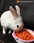 토끼가 정말 당근을 좋아할까? 토끼먹이 고민 해결