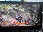 kbs -2 생생정보 5월 4일짜 고패삼 과 상황버섯 방송분 기록 사진 (산원초)002