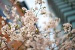 봄이 옵니다.