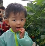 둘째육아일기, 딸기밭 견학 딸기에 홀릭