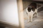 해운대 고양이