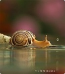 달팽이  (무지갯 빛 나래펴고)