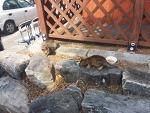 부산 태종대 유원지 - 머리를 다친 어미 길냥이의 새끼는 무사하네요.