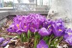 화사한 봄꽃...여긴 벌써 봄