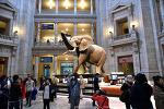 워싱턴 DC 국립 자연사박물관, 해양, 아프리카, 한국관