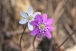 영흥도 봄꽃 나들이