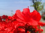 [무료 이미지] 꽃