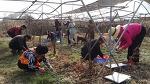 농촌체험 체험농장 가나골친환경체험농장 봄나물 쑥캐기체험 쑥인절미체험 산나물채취제험