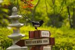 해오라기공원의 까치