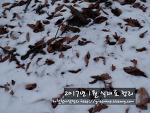 2017년 겨울식재료정리 2탄 (한겨울편)