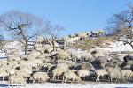 양들의 행진