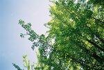 파아란 하늘과 초록 잎사귀, 그리고 비행기?