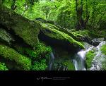 이끼계곡의 풍경화