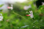 [포천 / 허브아일랜드] 1년 내내 꽃이 좋은,,, 허브아일랜드 # Canon 400D 2016