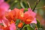 멕시코의 열대식물, 남국 정취 물씬 - 멕시코여행 11