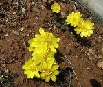 농암면의 봄