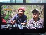 kbs -2 생생정보 5월 4일짜 고패삼 과 상황버섯 방송분 기록 사진 (산원초)003