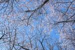 봄꽃놀이....벚꽃의 향연^^