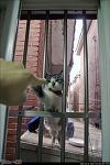 Windows CAT - 또 다른 세상과의 교감