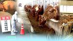 구제역 공포와 과장된 식품 정보들 - 우유에 대한 불편한 진실 (3편)
