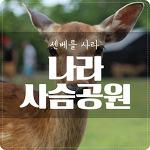 [나라] 사슴공원 : 넌 이미 센베를 사고 있다