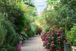 [포천 / 허브아일랜드] 동화 속 정원을 닮은,,, 허브아일랜드 # Canon 400D 2016