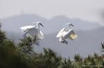 올림픽공원 백로와 왜가리, 한강 참게, 오리, 잉어, 물총새