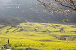 남해 여행 드무개 마을의 유채꽃과 모습들 (두모마을)