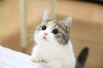 귀여운 고양이 짤