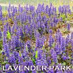 홋카이도 렌터카여행 후라노 꽃밭탐방 | 나카후라노 라벤더엔