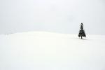 171124 - 비에이(마일드세븐 언덕, 크리스마스 나무)