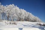 """알래스카"""" 눈 내리는 날에는 """""""