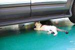 차 밑의 고등어태비 길냥이 | 캐논 35mm 1.4 사무엘