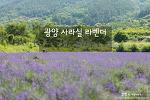 광양 사라실마을 라벤더, 보라빛 가득한 라벤더 마을