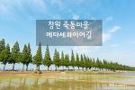 창원 죽동마을 메타세콰이어길, 함께 걸어볼까?^^