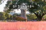 경주 첨성대 핑크뮬리, 가을 경주가 핑크빛으로 물든다