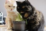 고양이가 좋아하는 캣그라스 심는 방법