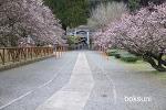 가고시마 여행 (3) 후지카와 텐만구