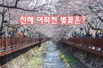 진해 여좌천 로망스다리 벚꽃, 봄바람이 불어온다.
