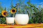 우유 vs 식물성 우유들... 뭐가 더 좋을까?