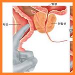전립선염의 증상 (생김새, 전립선 부위, 통증, 생기는 이유, 방광)