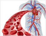 혈관을 청소해주는 식품 5가지